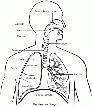 Spearfishing Lung Squeeze