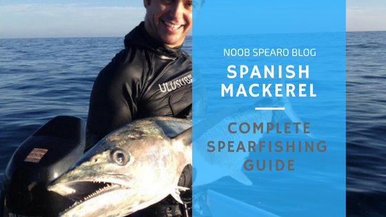 spanish mackerel complete spearfishing guide