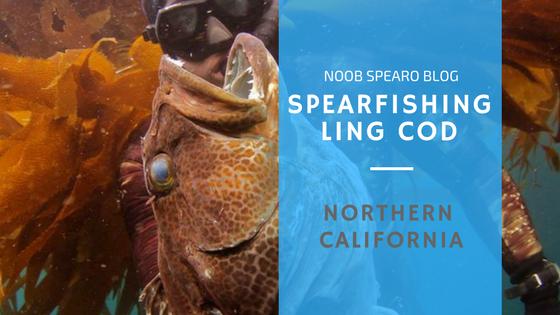 Spearfishing Northern California