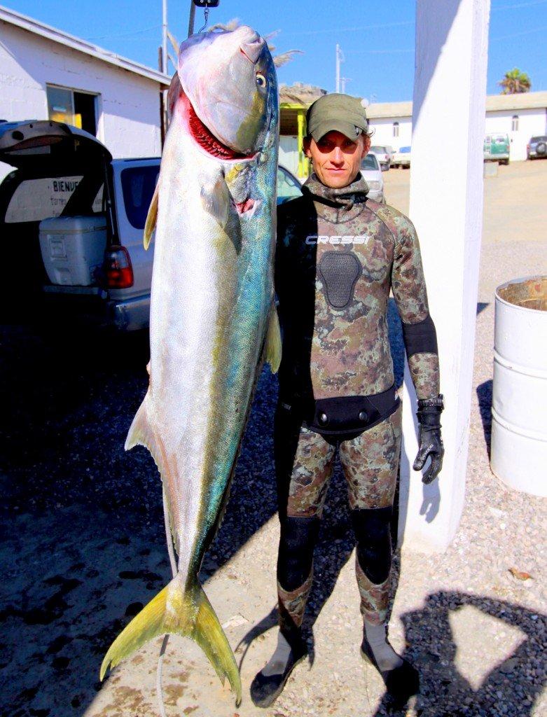Spearfishing yellowtail kingfish. Tanc Sade Spearfishing Interview