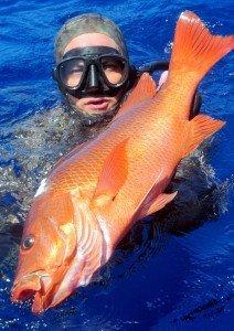 Tanc Sade Spearfishing Mangrove Jack