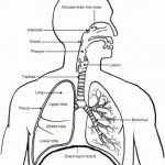 Spearfishing and Lung Squeezes