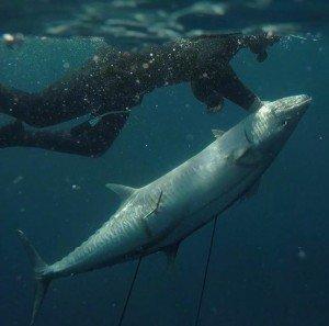 Peter Taing Spanish Mackerel