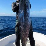Spearfishing Beginner tips- How to hunt Spanish Mackerel