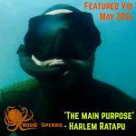 Featured Spearfishing Video May 2016  - Harlem Ratapu
