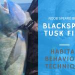 Targeting Black Spot Tusk Fish