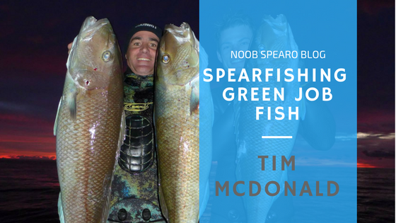 Spearfishing Green Jobfish