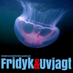 Uvpodcast Spearfishing Podcast list. Undervandsjagt & fridykning - Uvpodcast.