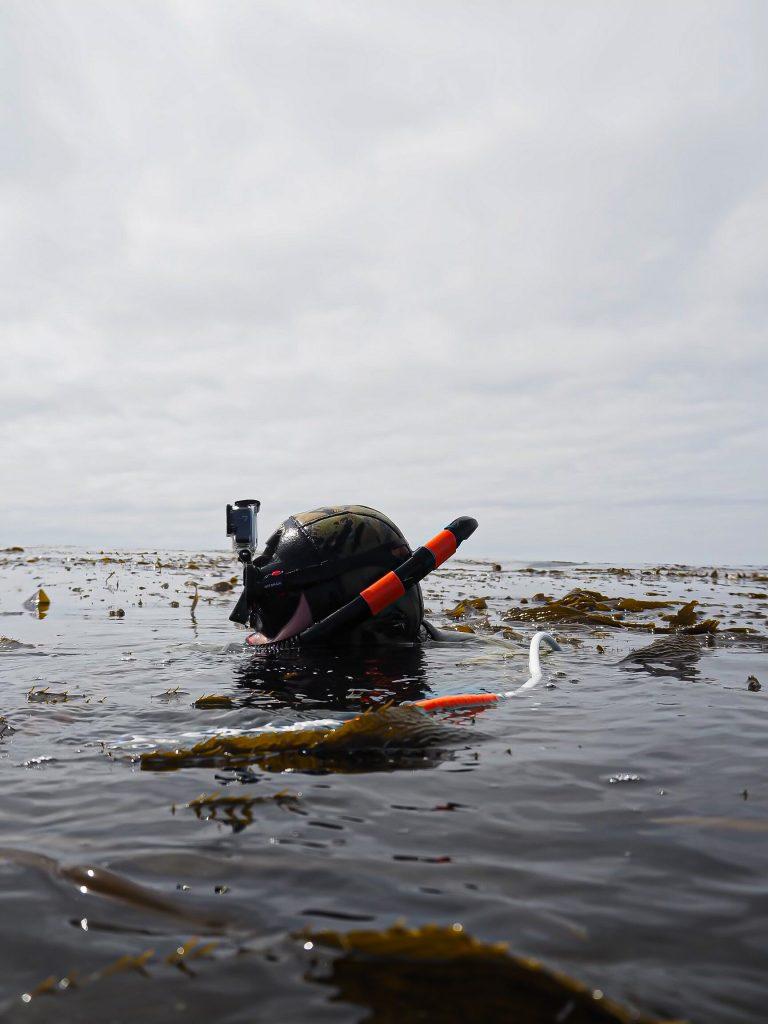 Freedive spearfishing techniques in kelp